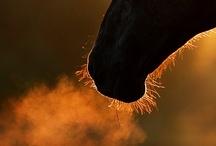 Enthousiasme équine / Equine Enrhusiasm #horses #cheval / by C. Marie Cline