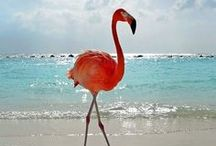 Animals - Pink Flamingo's!!! / by Down Blackberry Lane
