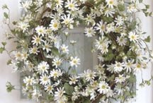 Daisies / by Louise Lang
