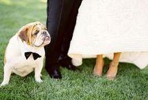Pets in Weddings / by Pet360.com