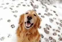 Winter Fun!  / by Pet360.com