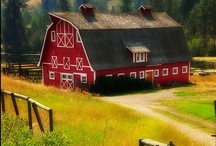 Red Barn & Country Life Style / I love barns and the country life; everything start right there! / by Dora Medina Allen