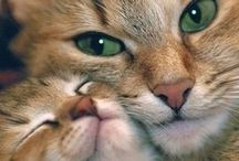Here Kitty... / by Karen Thompson