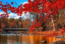 Fall in Love with Fall / by Ashley Jane