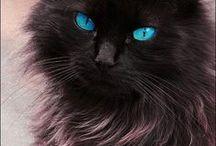 favorite animals / such beautiful animals / by Nita Sneddon