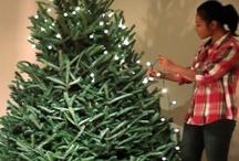 Christmas - The Tree / by Rachel Wormhoudt-Butler