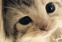 Meow.. (^._.^)ノ / by Ashley Hardin
