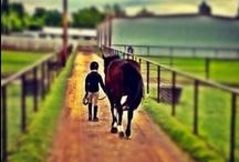 Horses / by Chelli Regier