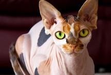 Cats / by Chelli Regier