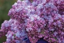 All Things Purple / Purple, purple, purple!  / by Rachelle