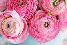 Fleurs | Plants | Gardening / I love flowers...and for one day when I start a garden... / by Shanna Nicole Design