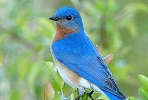 Birds and Birding / by Kiirsi Hellewell