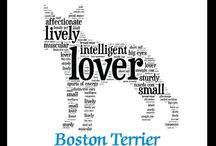I love Boston (Terriers) / by Julie Porter