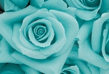 Aqua, teal, turquoise, tiffany blue....it's all good. / A feast for the eyes.... / by Kathy