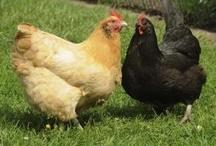 Pet News & Legislation / by All God's Creatures Pet Services