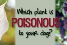 Pet Poisons (Plants) - Yikes! / There are tons of PLANTS around your home & yard that are  poisonous to your pets. You just might be surprise what you see on this board! If in doubt, or in an emergency, call your Veterinarian or call the Pet Poison Hotline at 1-800-213-6680   (they can answer questions about dogs, cats, birds,  large & small animal and exotic species). / by All God's Creatures Pet Services