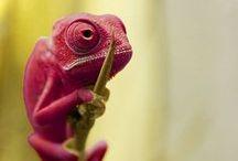 Reptiles / by Elise Granados