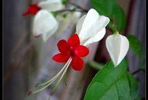 Plant: Flowering / by Elise Granados