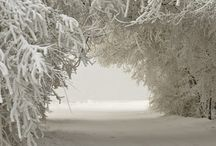 Winter / by Lynne Bender