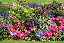 Gardening / by Kris Ritmire Barnaby