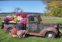 Garden On Wheels... / by Ar Families