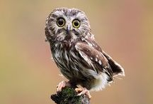 Owls / I love owls. I think it's my spirit animal. / by Nick Chill Photography