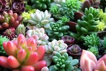 Succulent / by Sara Castro