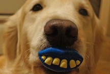 Funny Goldens / by The Daily Golden