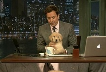 Celebrity Golden Retrievers / or celebrities with golden retrievers! / by The Daily Golden