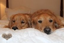 Double Vision / because two is always better than one! / by The Daily Golden