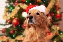 Holiday Golden Retrievers / It's about time I started a board for Christmas, Easter, Halloween, 4rth of July etc pictures of Golden Retrievers ....!! / by The Daily Golden