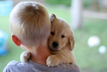 Goldens and Children / Needed to start a new board, the beautiful bond between Goldens and Children.... / by The Daily Golden