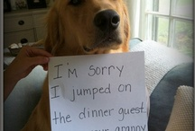 Golden Shaming / by The Daily Golden