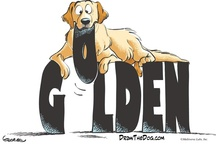 Golden Cartoons / by The Daily Golden