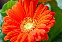 Flowers / Beautiful / by Myisha Jackson-Hamilton