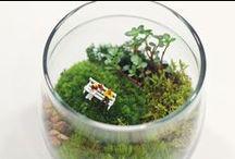 grow little / by Kaysinee Koonsap