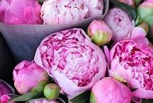 Les Fleurs / by Kathy Fraga