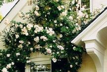 fleur / by Amanda John