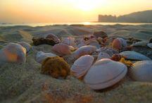 She Sells Seashells... / My dream beach cottage / by Jessica Henahan