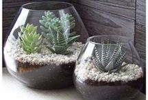 Cacti and Succulents / by nagasri Lawson