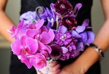 Radiant Orchid Weddings / by Michael C. Fina