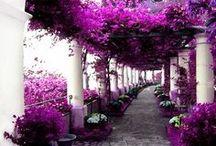 gardens / by tahnee edweiner