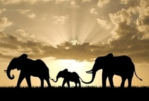 Elephants / by Mary Hawes