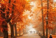 Ahhh, Autumn / by Shawn Shreeves