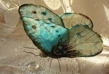 Butterflies & Moths 1  (closed) / by Clarice Larkin