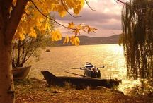 Golden Fall / by Lana Belic