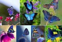 Butterflies & Moths 2 / by Clarice Larkin
