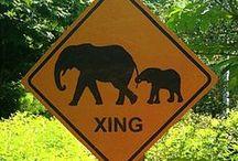 Elephants / by Clarice Larkin