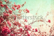 Loves Me, Loves Me Not (Flowers) / by Shutterstock