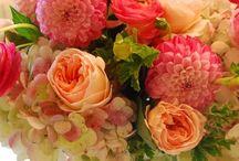 Flowers feed my soul / by Julie Tiernan DeBernardo